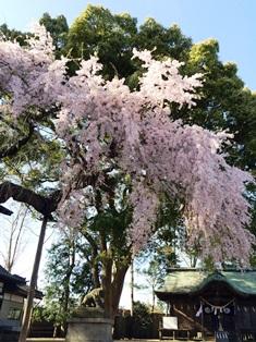 2015-4三島八幡