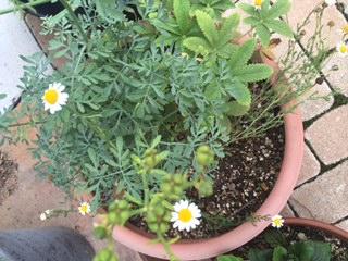 2夏の花.JPG