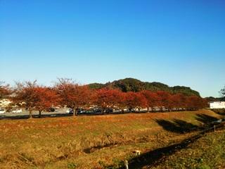 151105 kashima-01