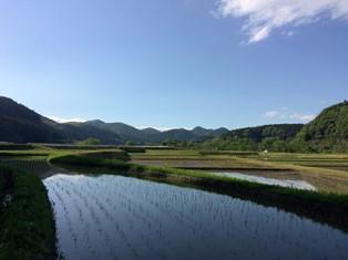 2016田園.JPG